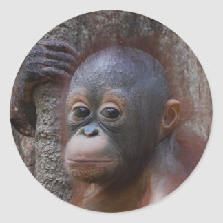 Orangutan Baby in Forest Classic Round Sticker