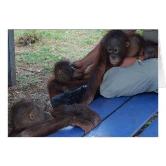 Orangutan Baby Orphans Card