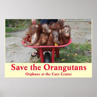 Orangutan Baby Orphans Go to School Poster