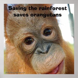 Orangutan Conservation Poster