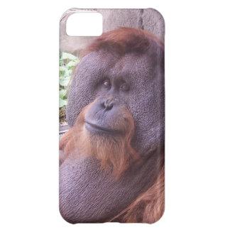 Orangutan Cover For iPhone 5C