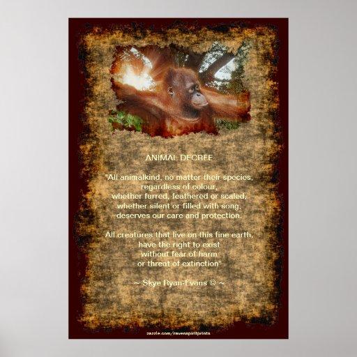 Orangutan Endangered Wildlife Animal Decree Poster