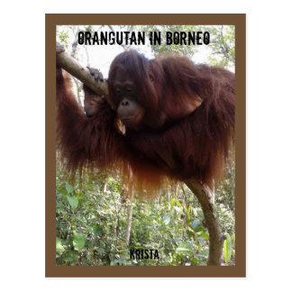 Orangutan in Tree Postcard
