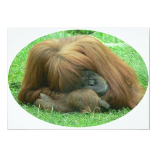 Orangutan Invitation