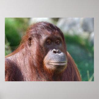 Orangutan Lady Poster
