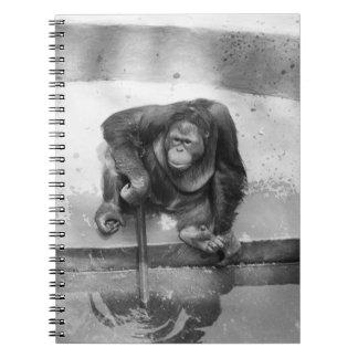 Orangutan Notebook