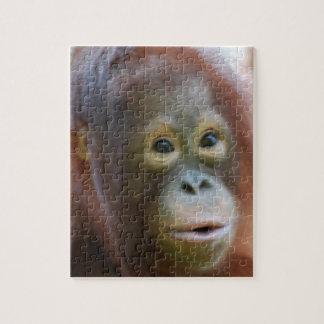 Orangutan on Island of Borneo Puzzles