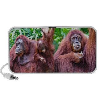 Orangutan pious Singapore zoo Mini Speakers