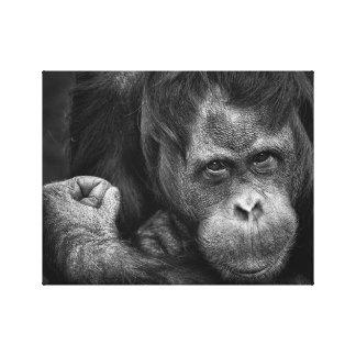 Orangutan Primate Canvas