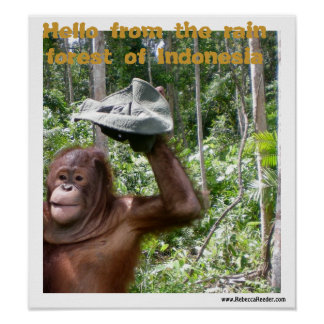 Orangutan rain forest welcome poster