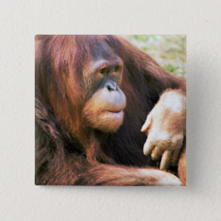 Orangutan Reclining 2 Inch Square Button