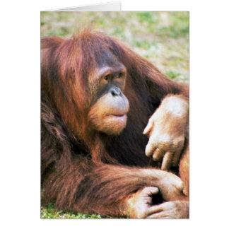 Orangutan Reclining Card