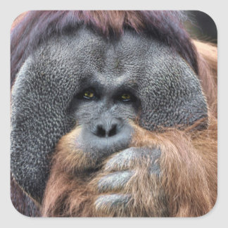Orangutan Square Sticker