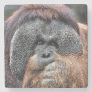 Orangutan Stone Coaster