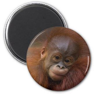 Orangutang baby 2 inch round magnet