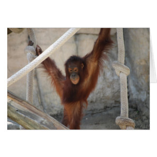 Orangutang Juvenile Card
