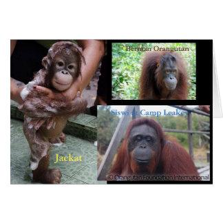 Orangutans Borneo, Tanjung Puting Card