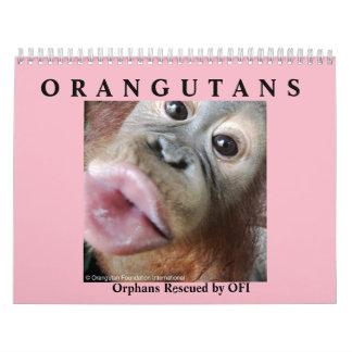 Orangutans Rescued Orphans Wall Calendars