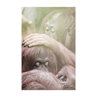 Orangutans Stretched Canvas Print
