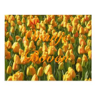Oranje Boven Orange Tulips Postcard