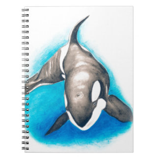 Orca Deep Dive Notebook