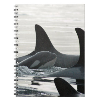 Orca Family Notebook