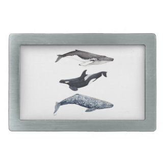 Orca, hunchbacked whale and gray whale belt buckle