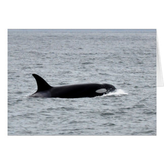 Orca in the Wild Card