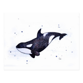 Orca Killer whale illustration Postcard