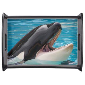 Orca, killer whale serving tray