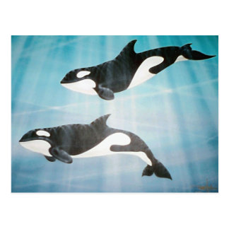 Orca Pair Postcard