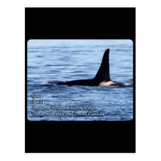 Orca;Southern Resident Killer Whale-L28 Orca Postcard