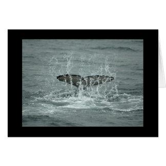 Orca Tail Slap Greeting Card