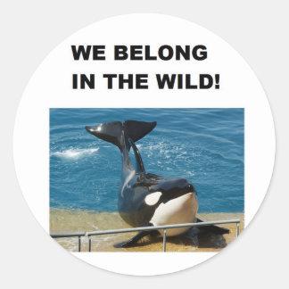 Orca we belong in the wild design classic round sticker