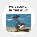 Orca we belong in the wild design round sticker