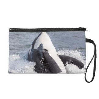 Orca whale breaching wristlet clutch