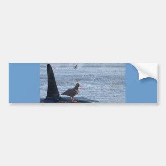 Orca Whale, Oyster Catcher Cascades Montage Bumper Sticker