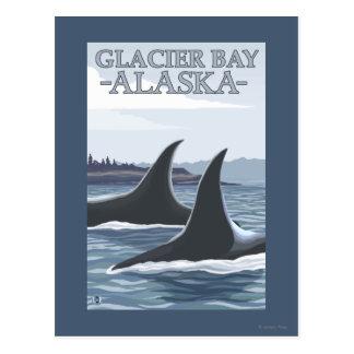 Orca Whales #1 - Glacier Bay, Alaska Postcard