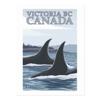 Orca Whales #1 - Victoria, BC Canada Postcard