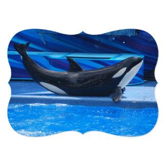 Orca Whales Card