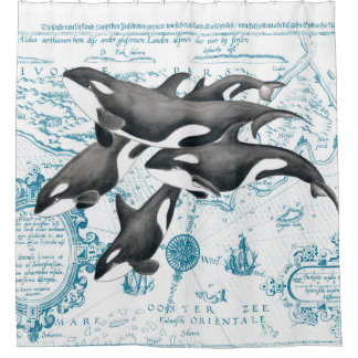 Orca whales family ancient blue