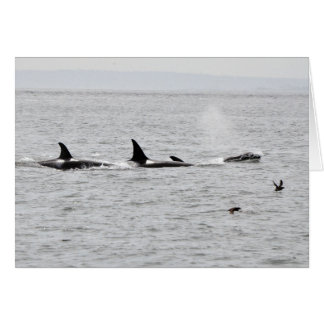 Orcas in the Wild Card