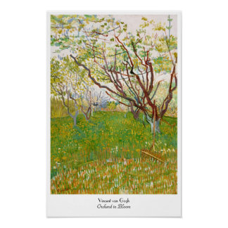 Orchard in Bloom Vincent van Gogh  fine art Poster