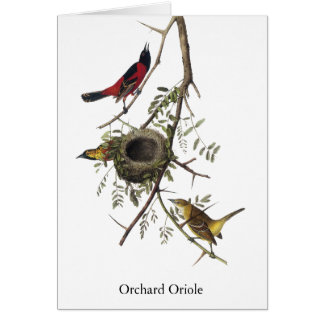 Orchard Oriole - John James Audubon Card