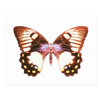 Orchard Swallowtail Butterfly Postcard