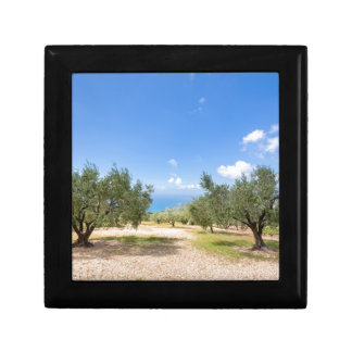 Orchard with olive trees at sea in  Greece Gift Boxes