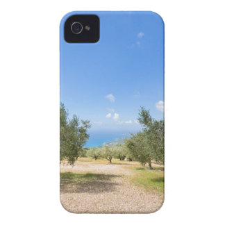 Orchard with olive trees at sea in  Greece iPhone 4 Covers