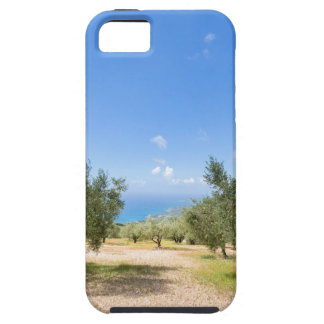 Orchard with olive trees at sea in  Greece iPhone 5 Covers