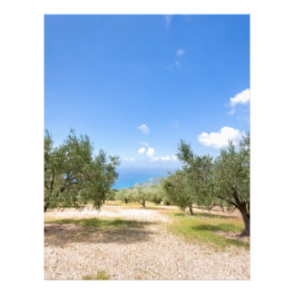 Orchard with olive trees at sea in  Greece Letterhead