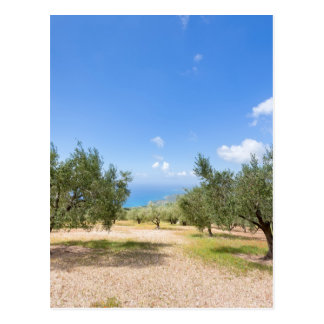 Orchard with olive trees at sea in  Greece Postcard